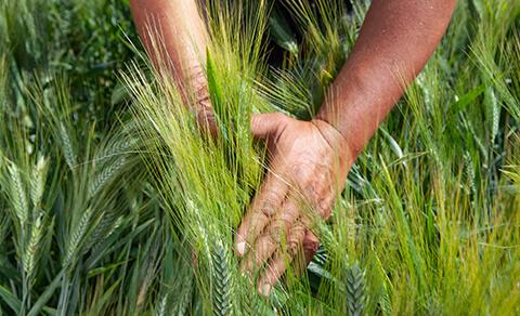 Agrievolution - Di' la tua sul futuro dell'agricoltura